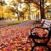 """""""Assim como as folhas das arvores caem no outono para poder suportar o inverno nós também nos modificamos para seguir vivendo"""" (Gilberto M. Refatti)."""