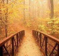 """""""Não se preocupe, não tenha pressa. O que é seu, encontrará um caminho para chegar até você. Deus não demora, ele capricha!"""" (Caio Fernando Abreu)."""